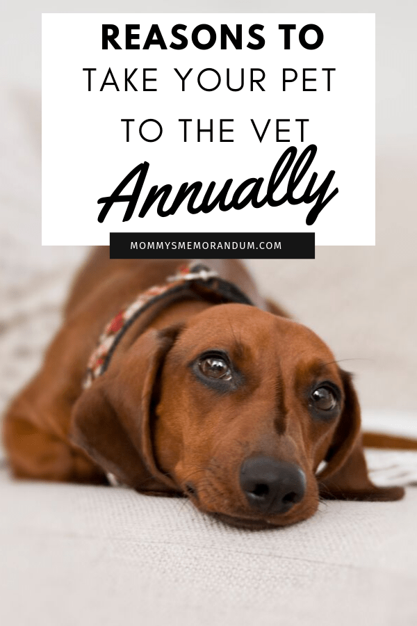Pets Also Need A Regular Checkup As We Humans Do Find Out Why You Need To Take Your Pet To A Vet Annually Pets Vets Your Pet