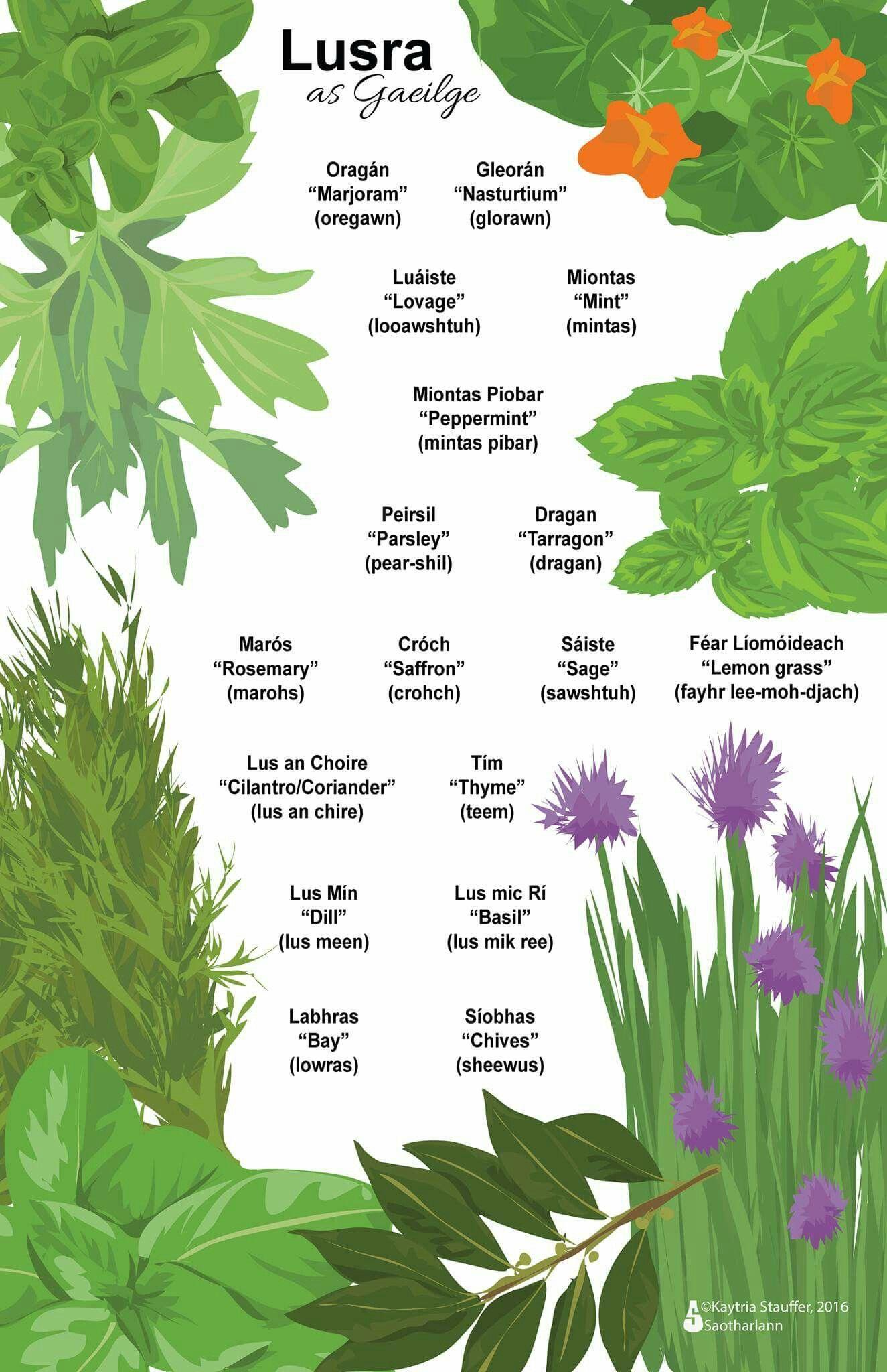 Lusra Herbs Gaeilge Irish Irish Language