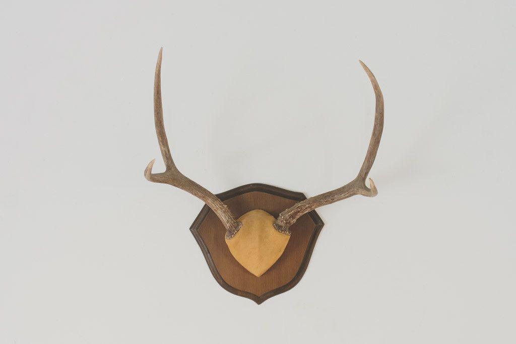 Handcrafted Pine Deer Taxidermy Plaque--Antler Panel Wall Plaque