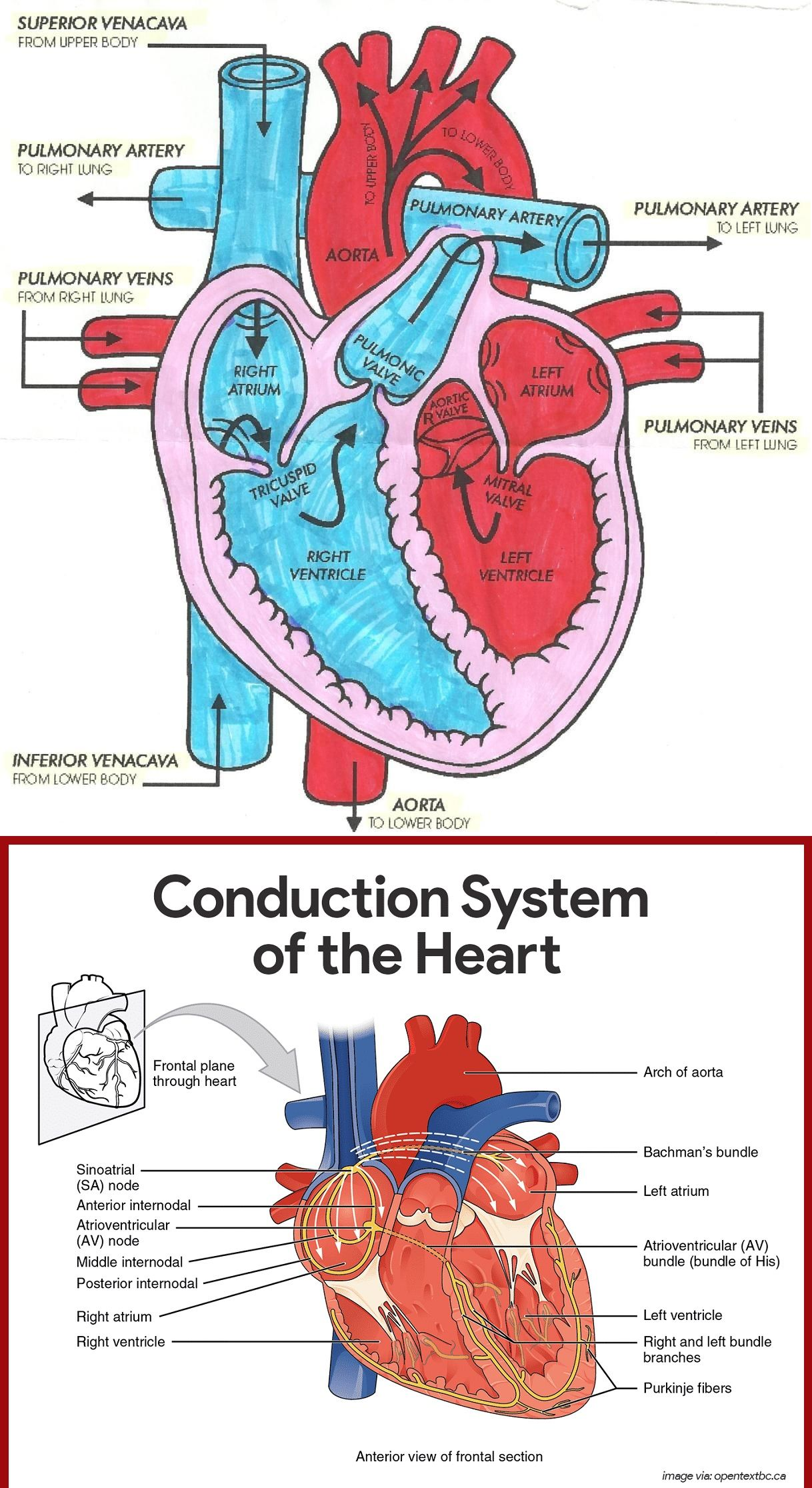 Diagram of Heart Blood Flow for Cardiac Nursing Students ...