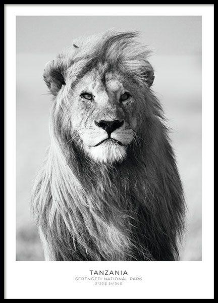 Lion Affiches Zwart Wit Leeuw Kunst Poster Afdrukken