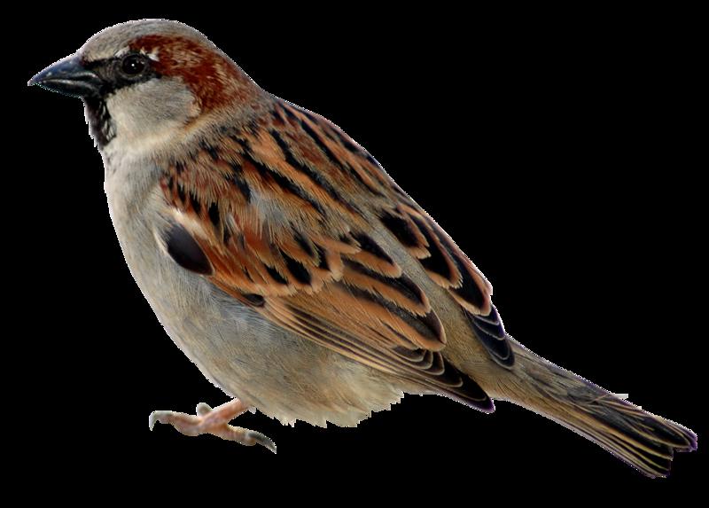 Птички в картинках на белом фоне