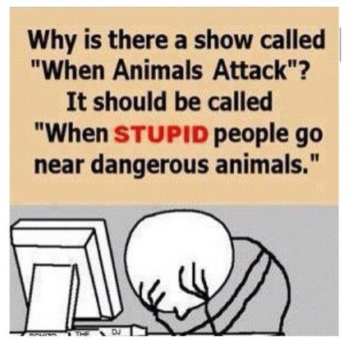 When animals attack. Pinned From Junglegag - Click for more!