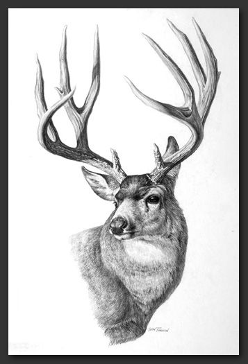 Leon Parson Studio - Print Archives DEER SKETCHES Deer art, Deer