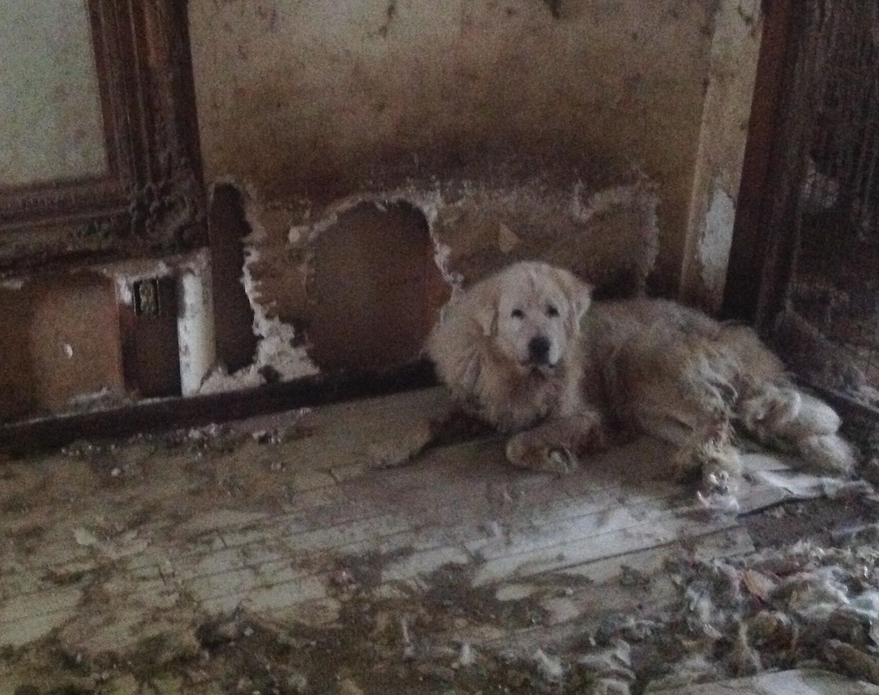 Florida Animal Refuge Rescues Great Pyrenees From Heartbreaking