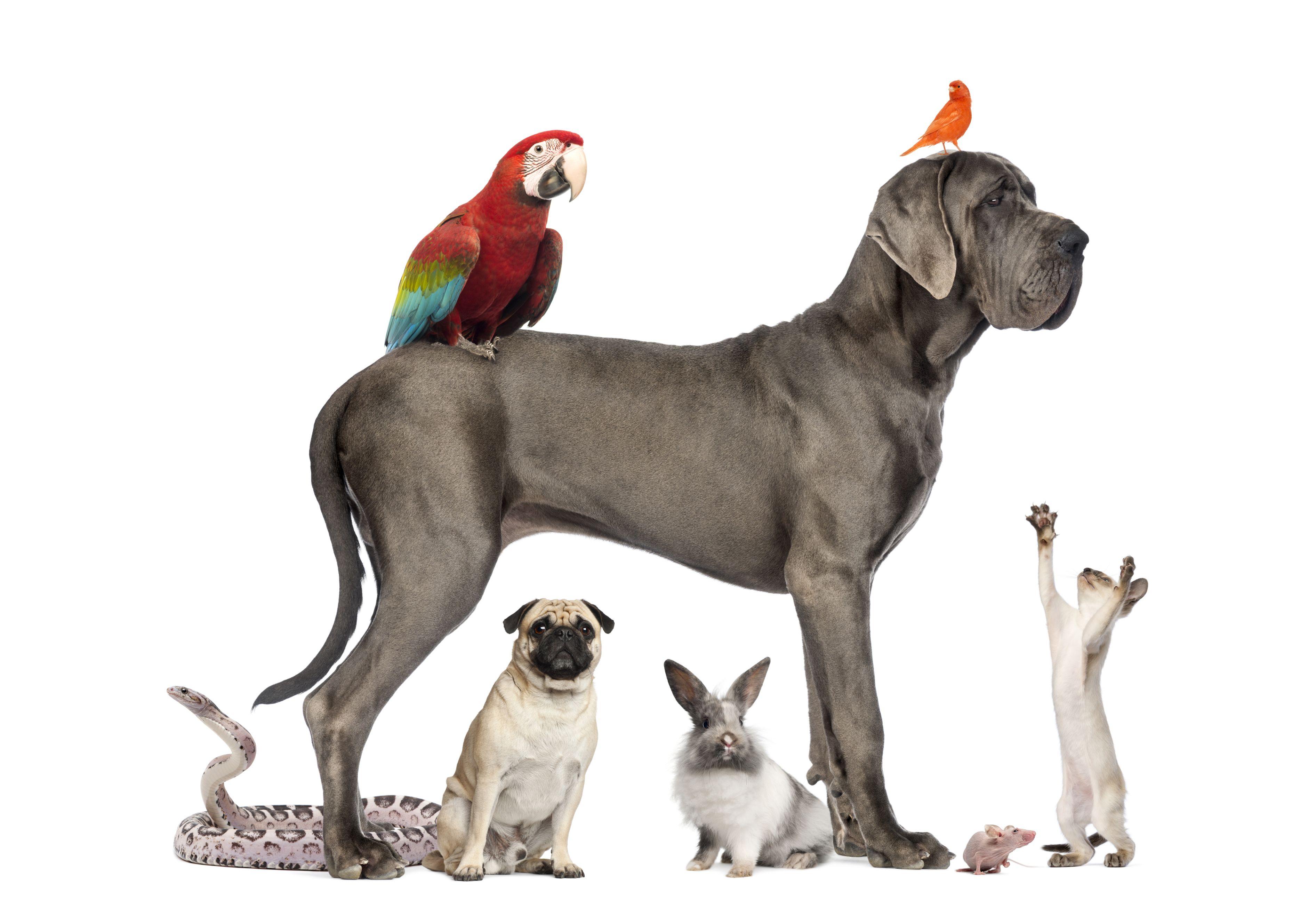 My future pets. Animals, Emotional support animal