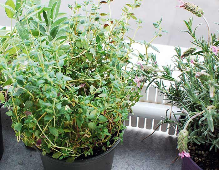 Diy: Kräuter Auf Das Fensterbrett Geht Ganz Einfach. HÖfte Von ... Pflanzen Fur Frische Luft Nutzen