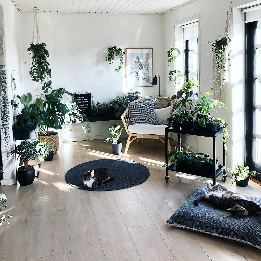 "Karin Helvig on Instagram: ""Monday in the tiny jungle 🤗 sun and relaxation 💚 . . . #pottedjungle #indoorjungle #urbanjunglebloggers #urbanjungle #indoorplants…"""