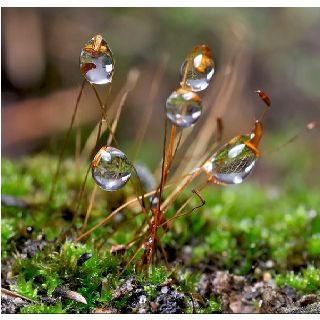 Amazing Rain Water Captured Raindrops Pinterest - Amazing images captured tinniest water droplets
