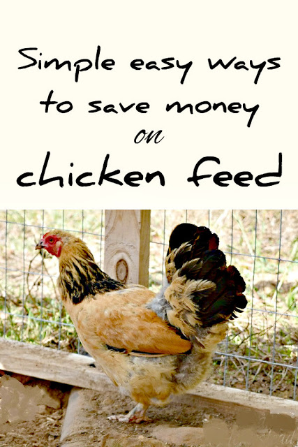 8 Ways You Can Save Money On Chicken Feed Chicken Feed