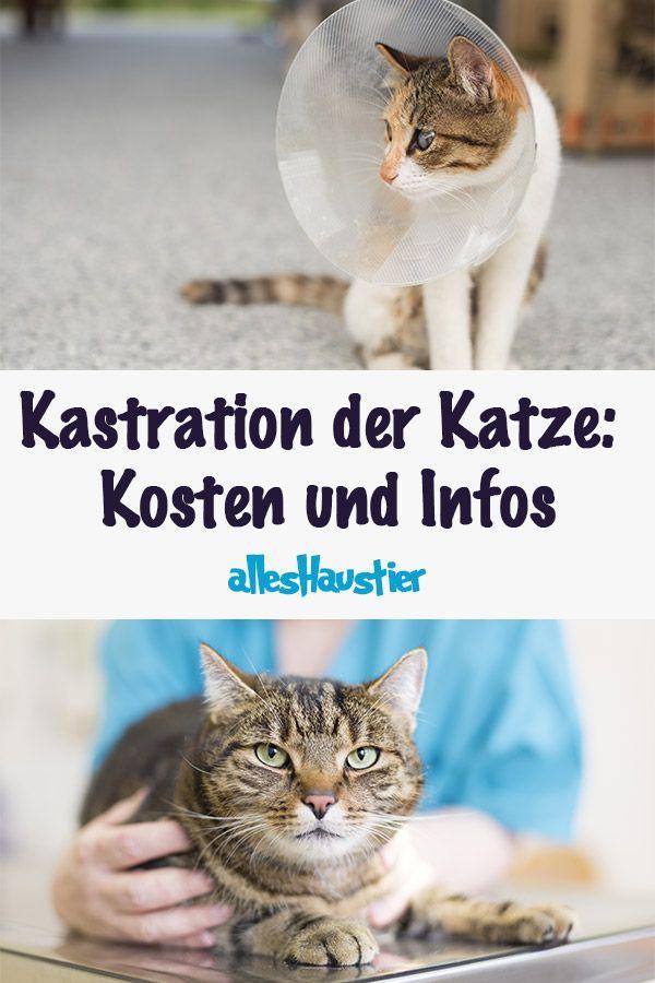 Kastration Der Katze Kosten Und Was Du Sonst Wissen Solltest Katzen Katzenhaltung Hund Und Katze