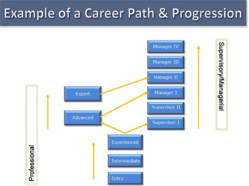 Career Framework Template Google Search Career Path Career
