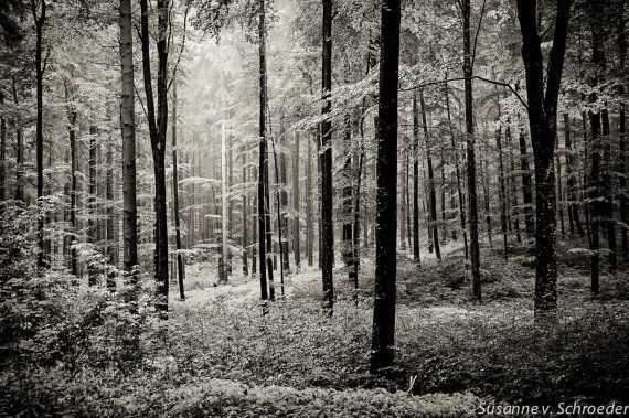 Black White Photography Forest Scenery Rainy Summer Forest Germany Fine Art Print Trees Refreshing Healing Green Home Decor