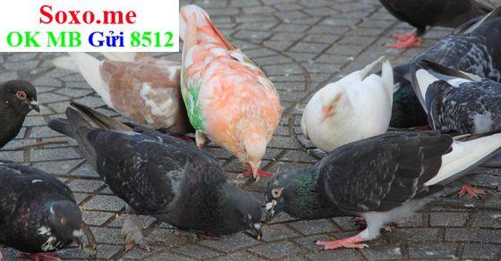 May mắn từ giấc mơ thấy chim bồ câu 808d3531d5f8d038f86b607fb4237f2c