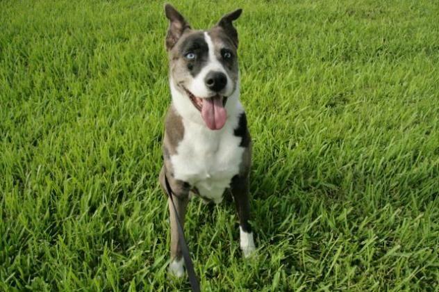 Adopt Mason on Dogs, Adoption, West palm beach florida