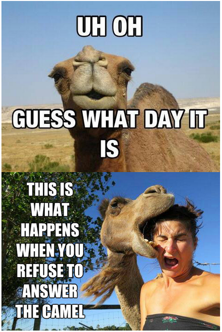 Wednesday Funny Memes Coffee Camel