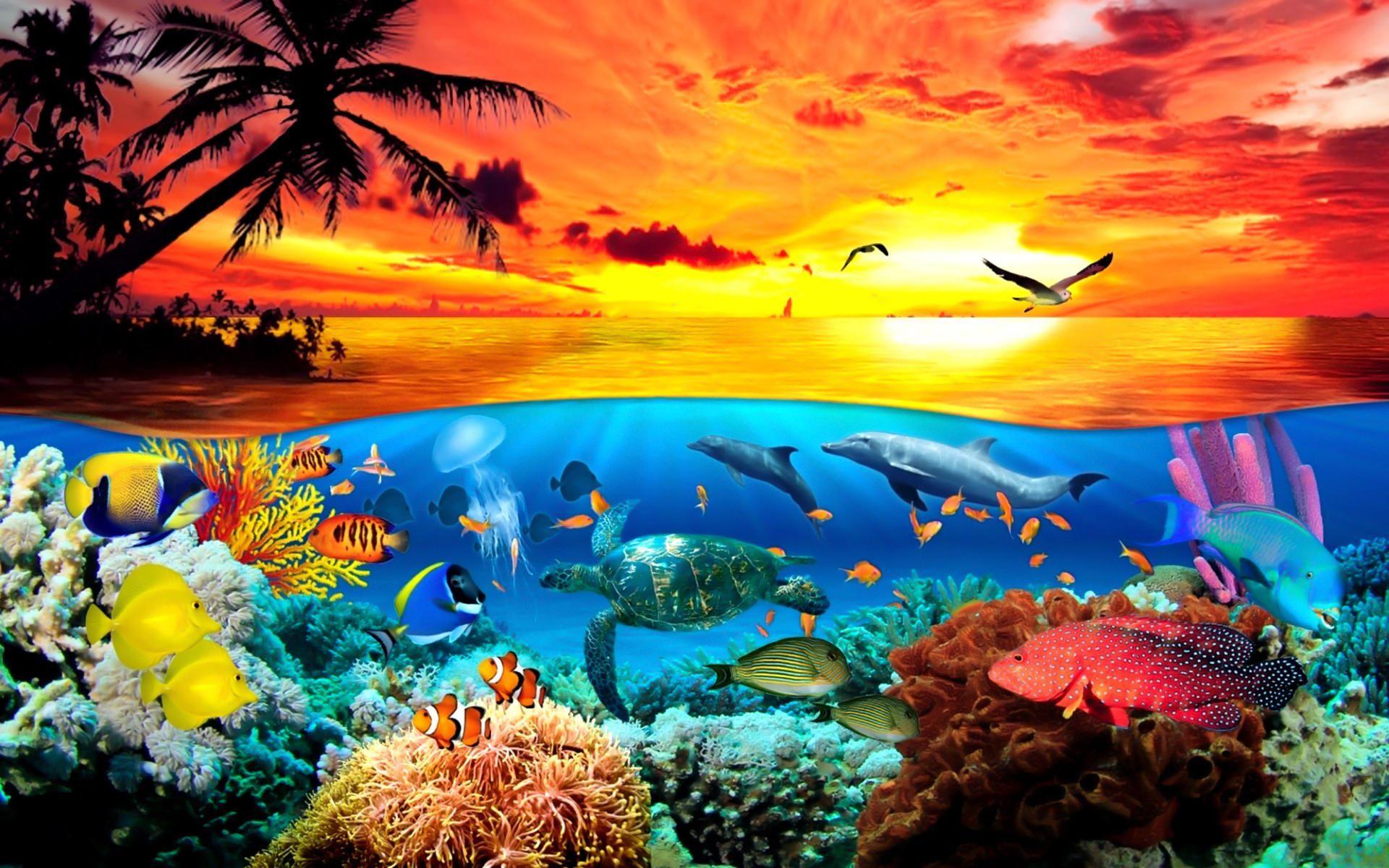 Under The Sea Animals World Wallpaper