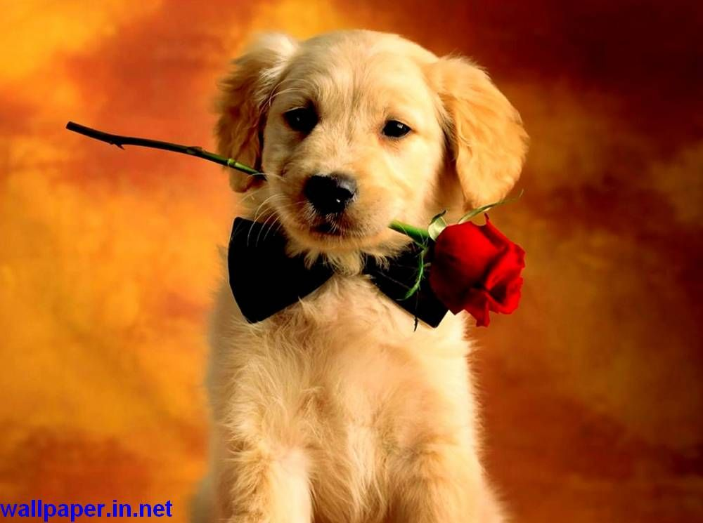 Cute Baby Animals Hd Wallpapers Cute Animals Images Cute Animal Pictures Baby Dogs