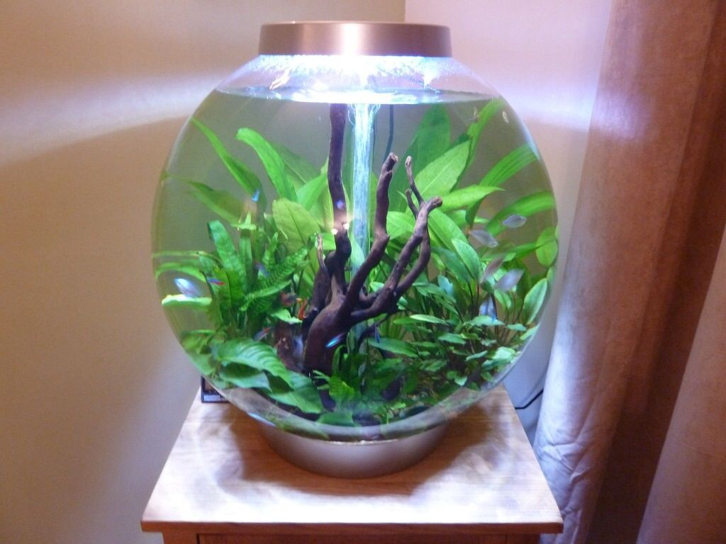 Planted Biorb Aquarium Ideas Pinterest Plants Fish