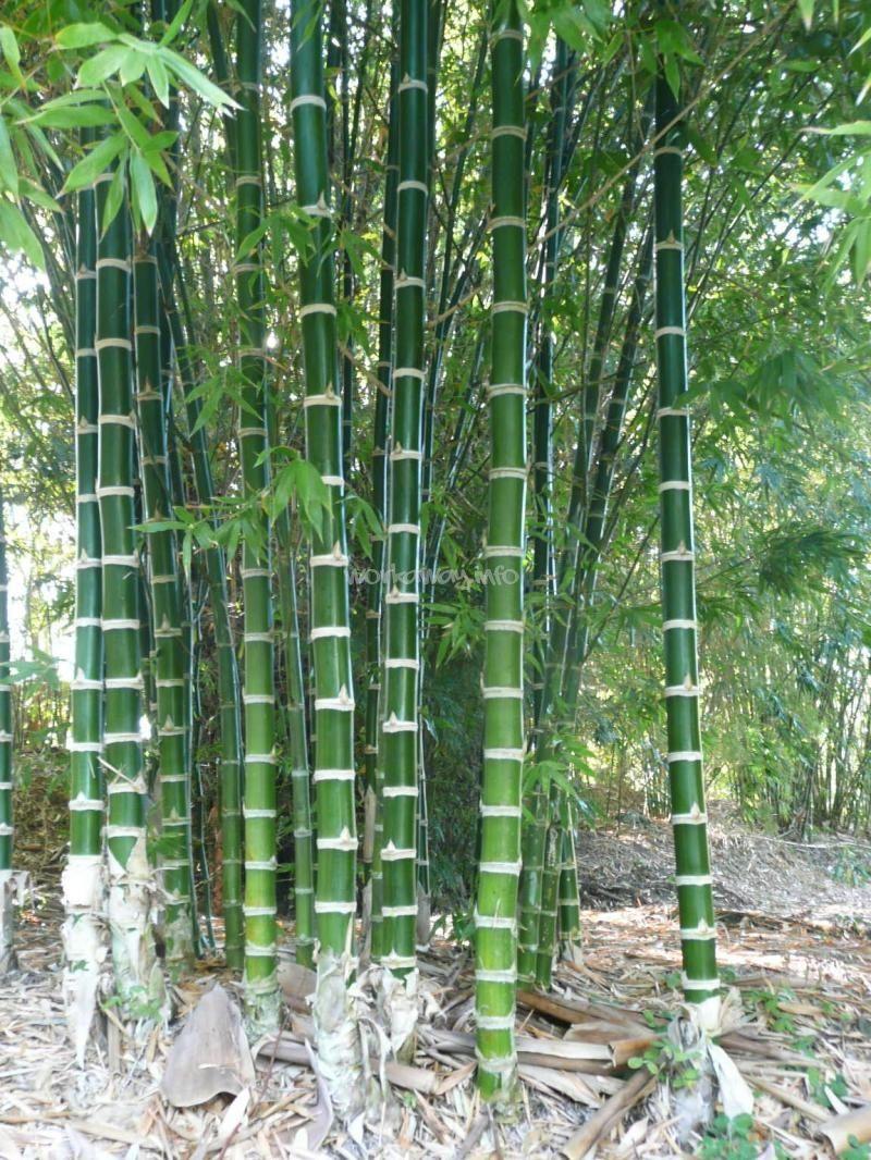 tropical bamboo garden | Work in a tropical Bamboo garden ...