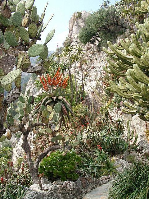 Pin On Desert Garden