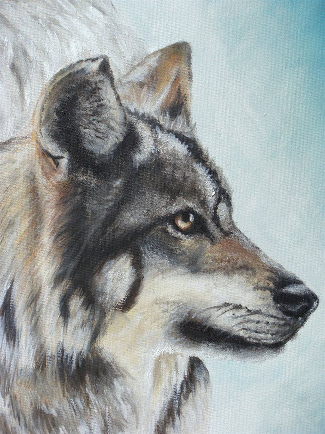 acrylic paintings of wolves Google Search