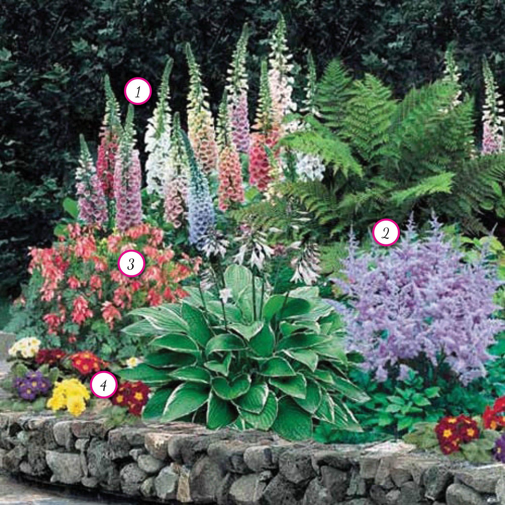 Flower Garden: Shade Perrenials €�1: Mixed Foxglove €�2: Astilbe €�3