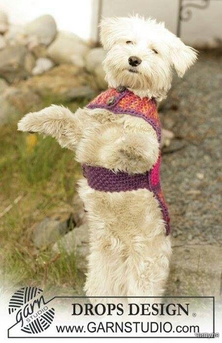 Chaleco de perro | Bebe | Pinterest | Ropa para perros, Amo y Modelo