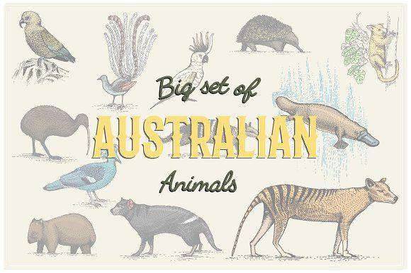 Engraved Australian Animals by ArtBalitskiy on @creativemarket