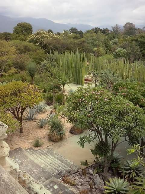 Jardin Botanico De Ex Convento De Santo Domingo Oaxaca Oax Mexico Landscape Design Healing Garden Landscaping Inspiration