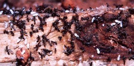 Amazing Microsocieties Ants Vs Termites Webecoist