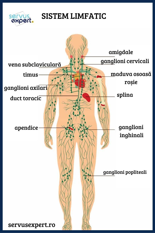 Drenajul limfatic