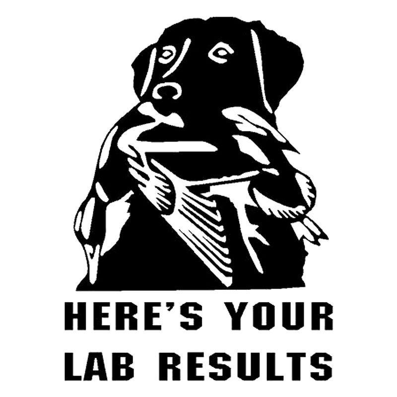Lab duck hunt dog labrador  retriever auto truck decal WHITE Vinyl Decal