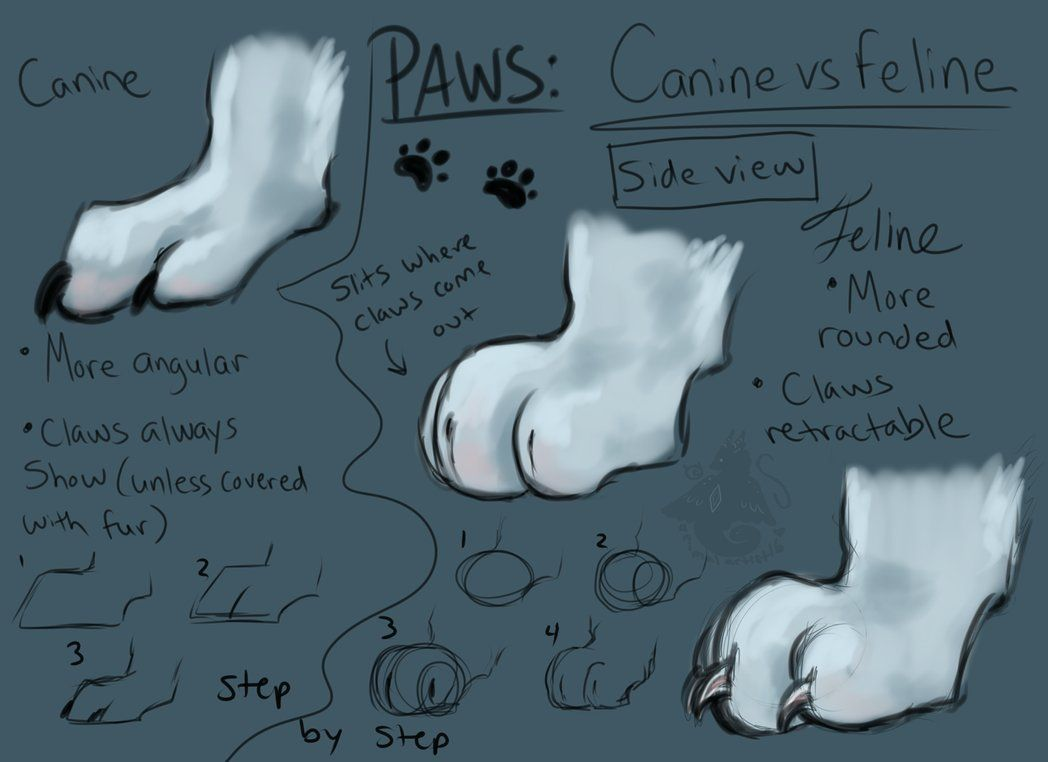 Pin by Maggie on Drawing References/Tutorials | Pinterest | Drawing ...