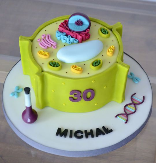 Plant Cell Cake Plant Cell Cake Plant Cell Model Plant Cell