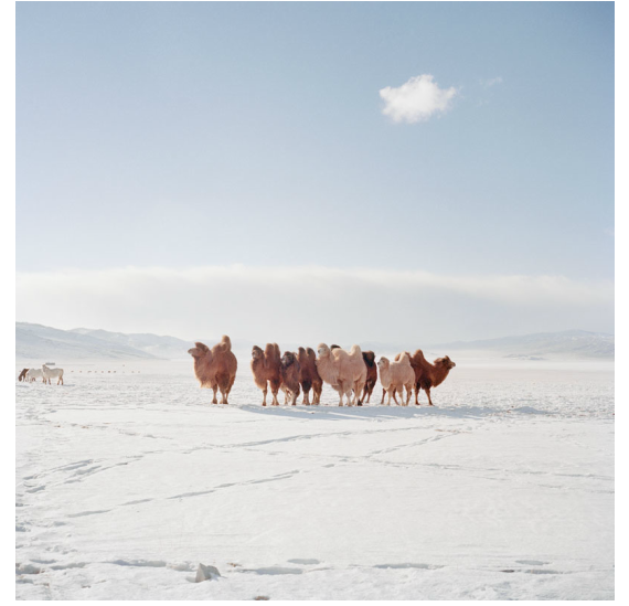 Chiara Goia: Mongolia in Winter
