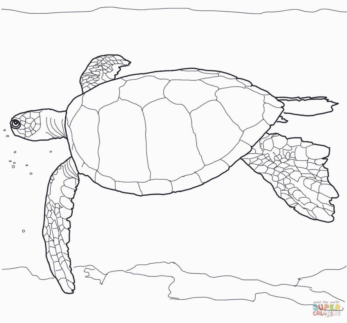 Sea Turtle Coloring Page New Hawaiian Green Sea Turtle Coloring