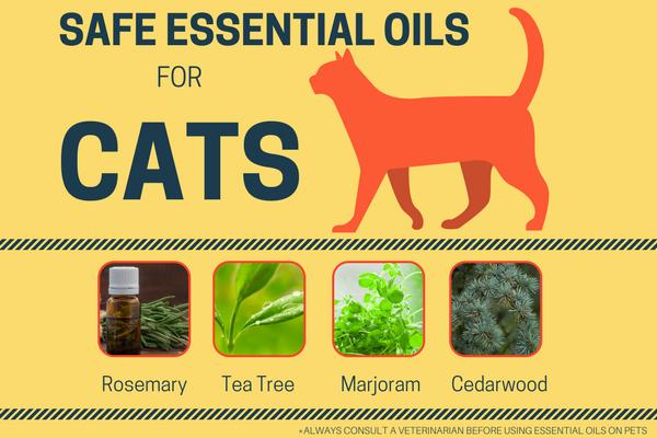 Essential Oils for Cats Are essential oils safe
