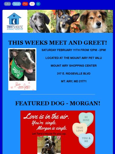 Tara S House Weekly Update 2 8 17 Pets Animal Rescue Taras
