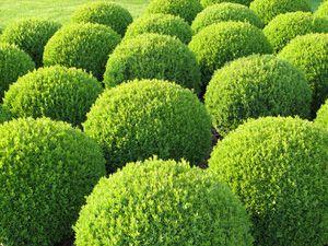 Drought tolerant plantsandersoncosta nursery shade garden designs - Heat tolerant plants keeping gardens alive ...