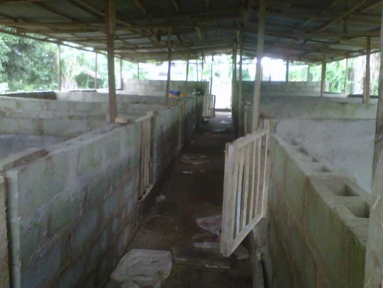 Design And Construction Of Piggery Pens In Nigeria Pig House Dog House Plans Dog House Diy