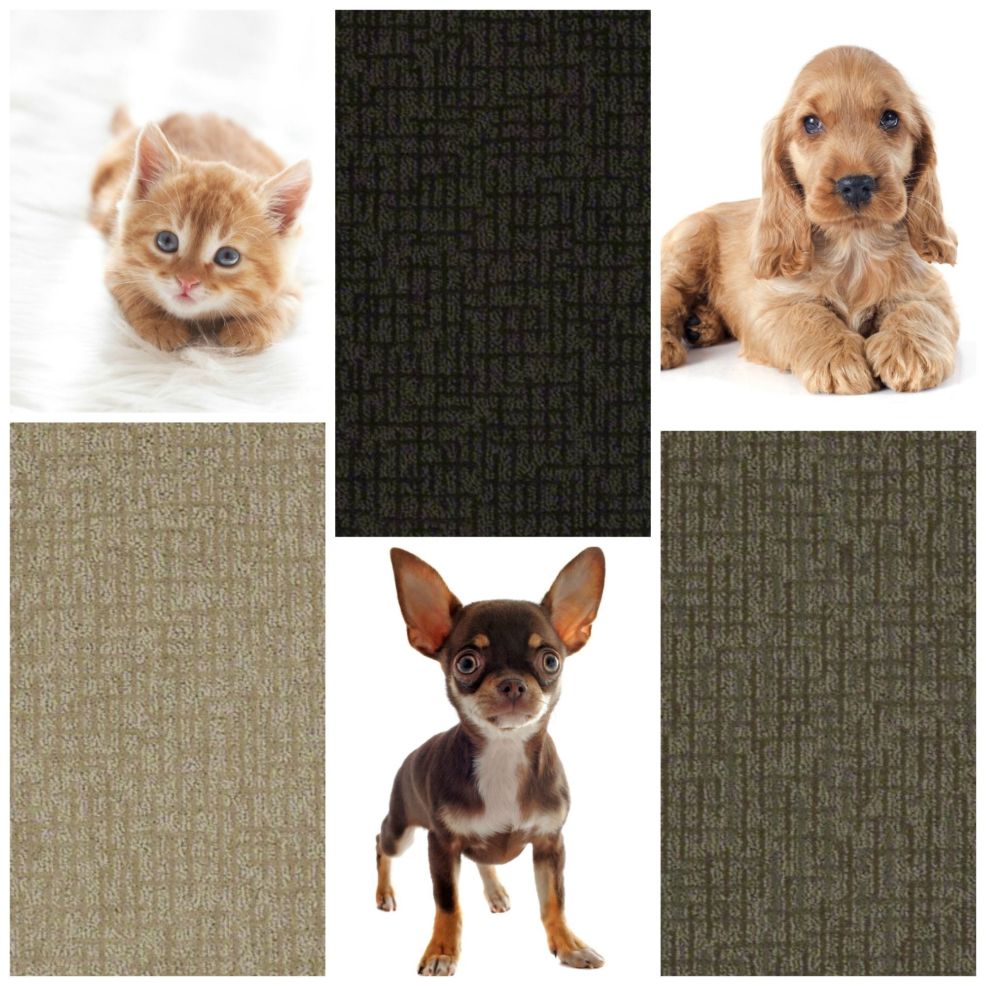 Chance Carpet from Tuftex Pet Protect Style Carpet