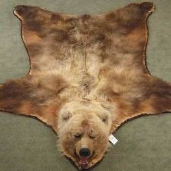 Because It Would Go With My Decor But More So We Could Literally Walk On A Bear Hehehe Get As In Chicago Bears