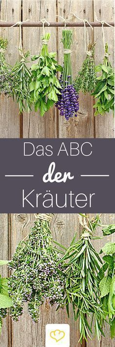 Photo of Das ABC der Kräuter