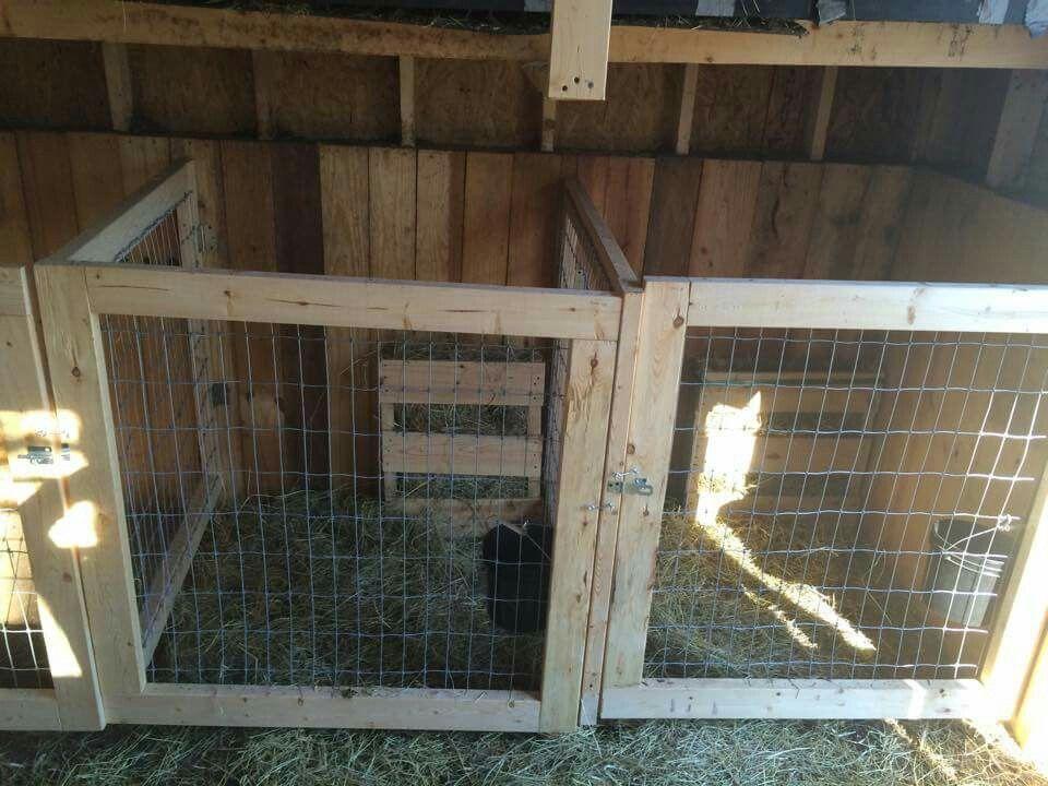 Kidding Stalls Goats Pinterest Goats Goat Barn And