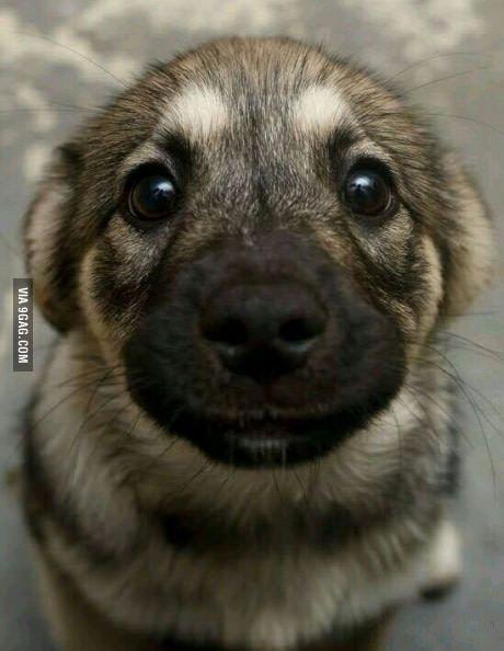 Way Too Cute Cute Baby Animals Cute Animals Cute Dogs