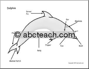 Teachers can use this diagram when teaching students about dolphins teachers can use this diagram when teaching students about dolphins after the lesson you ccuart Gallery