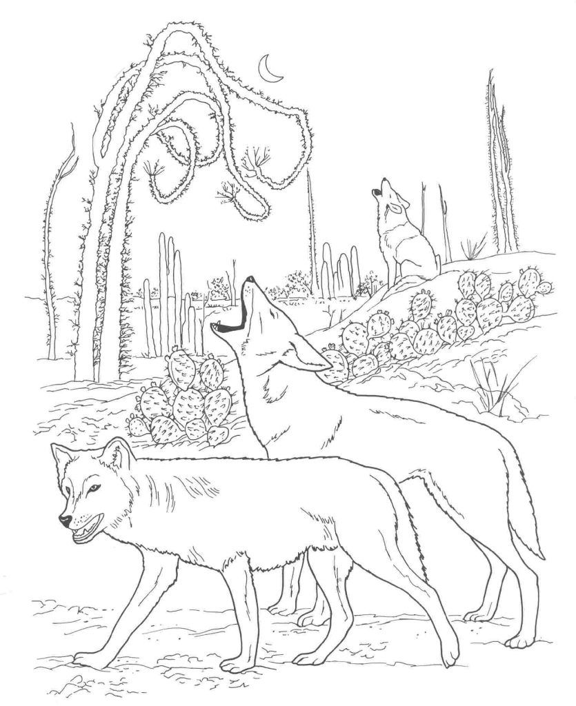 Free Printable Coyote Coloring Pages For Kids Animal Coloring Pages Wolf Colors Desert Animals Coloring