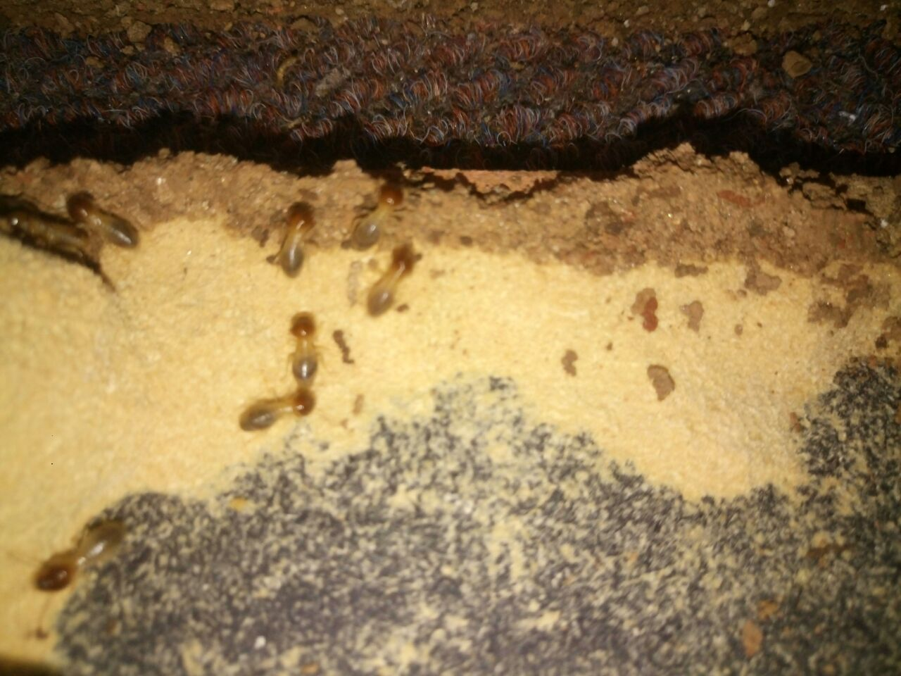 Termite Treatment Termites Termite Control Wood Termites