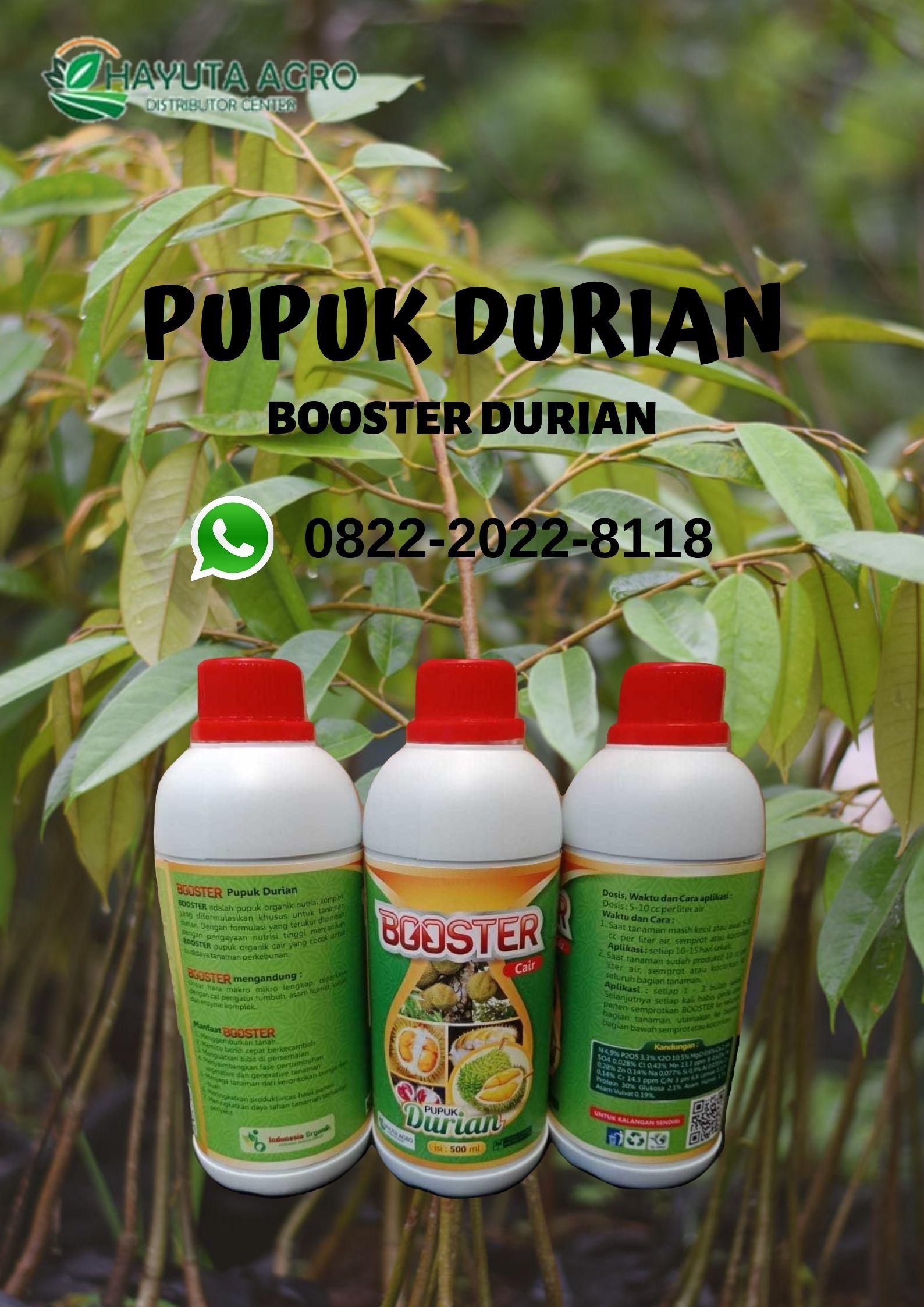Wa O822 2o22 8ii8 Jual Pupuk Durian Musang King Di Gowa Harga Pupuk Buah Durian Di Jeneponto Buah